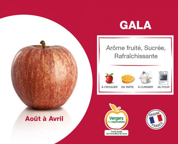 fiche pomme gala