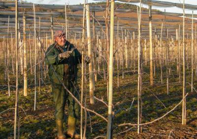 taille des vergers en Alsace à Westhoffen